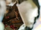 In this handout photo released by the Wildlife Trust of India on July 18, 2019, a tiger from the Kaziranga National Park is seen taking shelter in a shop following heavy monsoon rains in the eastern Indian state of Assam. — AFP