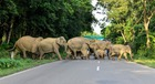 In this photo taken on July 17, 2019, a herd of wild elephants cross the National Highway-37 in search for safer places at the flood affected area of Kaziranga National Park in the India's northeast state of Assam. — AFP