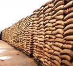Wheat stock in Bhiwani gets soaked