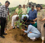 260 saplings planted along Buddha Nullah