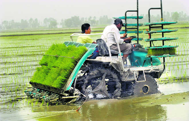 Agricultural mechanisation is the best bet