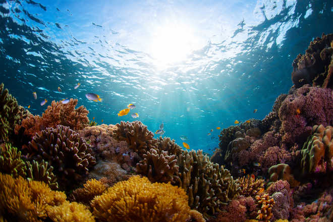 Marine heatwaves a bigger threat to coral reefs than thought