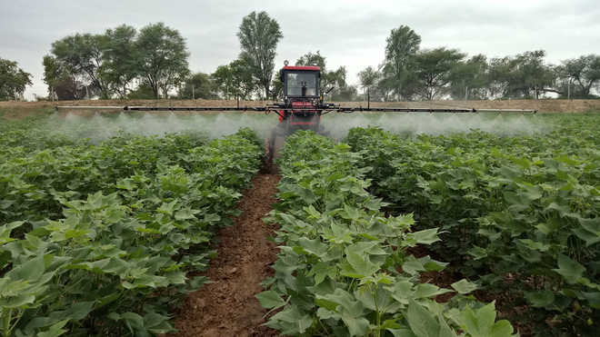 Cotton growers rent boom sprayers for pest control