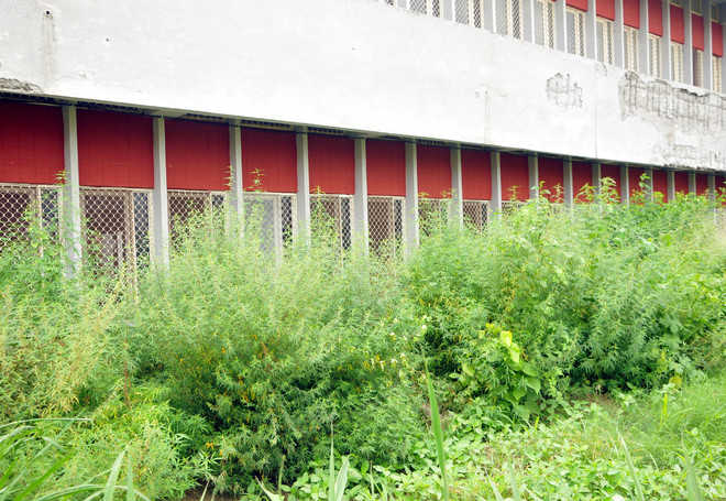 Rain gives impetus to wild growth at vacant places