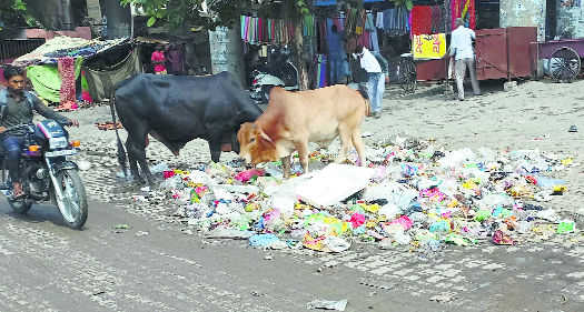 Political heat over tardy garbage lifting