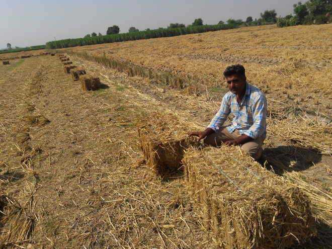 Scientists to help farmers manage crop residue