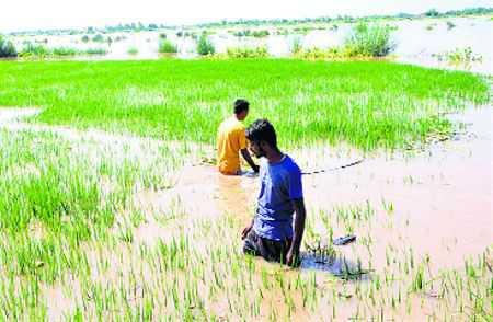Standing crops hit; farmers seek damages