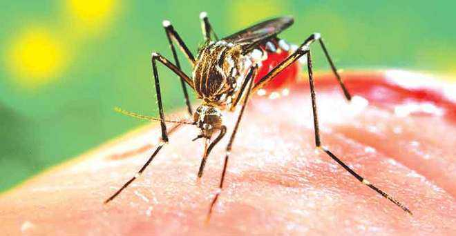 Dept issues 5,402 notices over mosquitogenic conditions