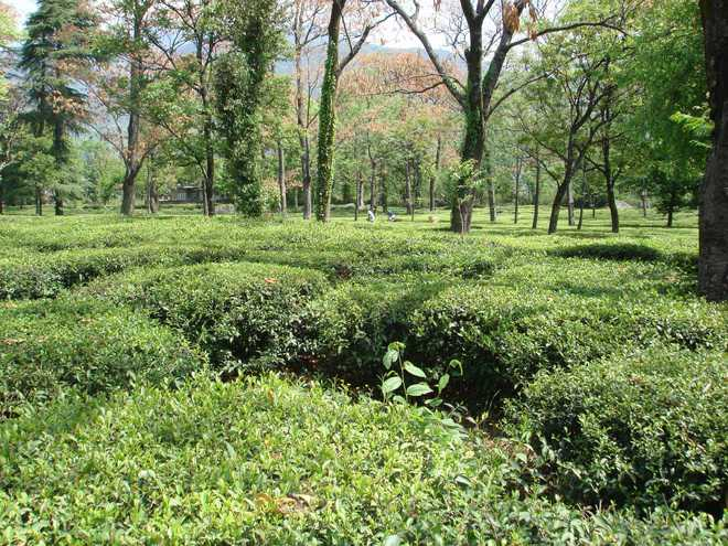 Not paying heed to law, govt invites proposals for promoting tea tourism