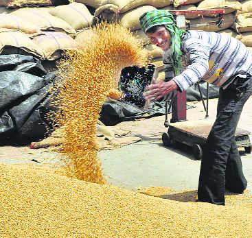 Grain-rich Punjab woos food processing sector