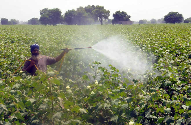 Slowdown in textile sector likely to hit cotton growers