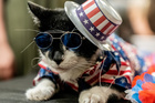 Balboo wears a patriotic flag hat at backstage before the Algonquin Hotel's Annual Cat Fashion Show in the Manhattan borough of New York City, New York, August 1, 2019. — Reuters