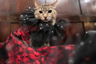 Mrs.Parberry, dressed inspired by the flamenco dress, is seen at backstage before the Algonquin Hotel's Annual Cat Fashion Show in the Manhattan borough of New York City, New York, August 1, 2019. — Reuters