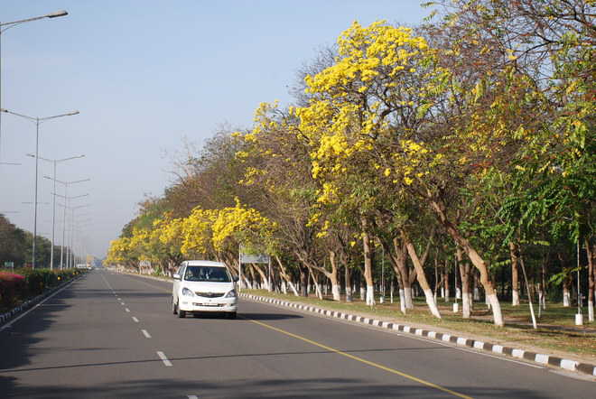 Chandigarh, as green as it gets