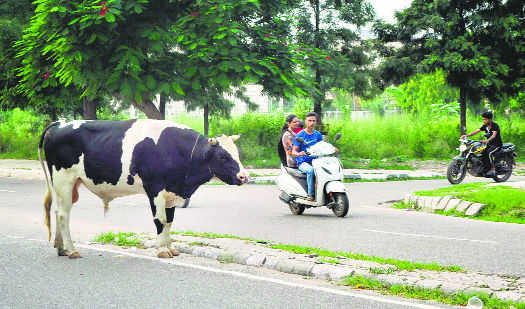 Rs 1-lakh compensation for death due to stray menace