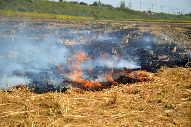 High Court stays recovery of fine for stubble-burning