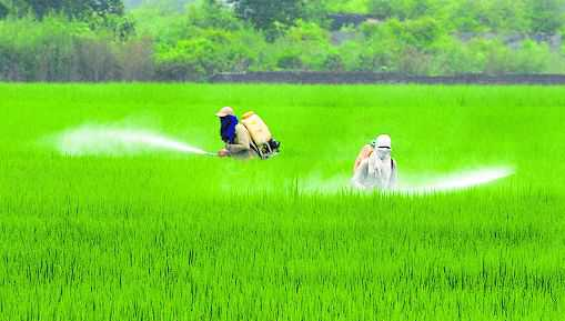 Tagging of basmati on, over 2-lakh hectares covered
