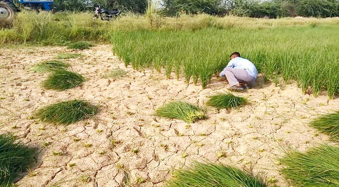 Crops take a hit with 42% deficient rainfall