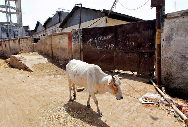 Jharkhand man lynched after being accused of cow slaughter